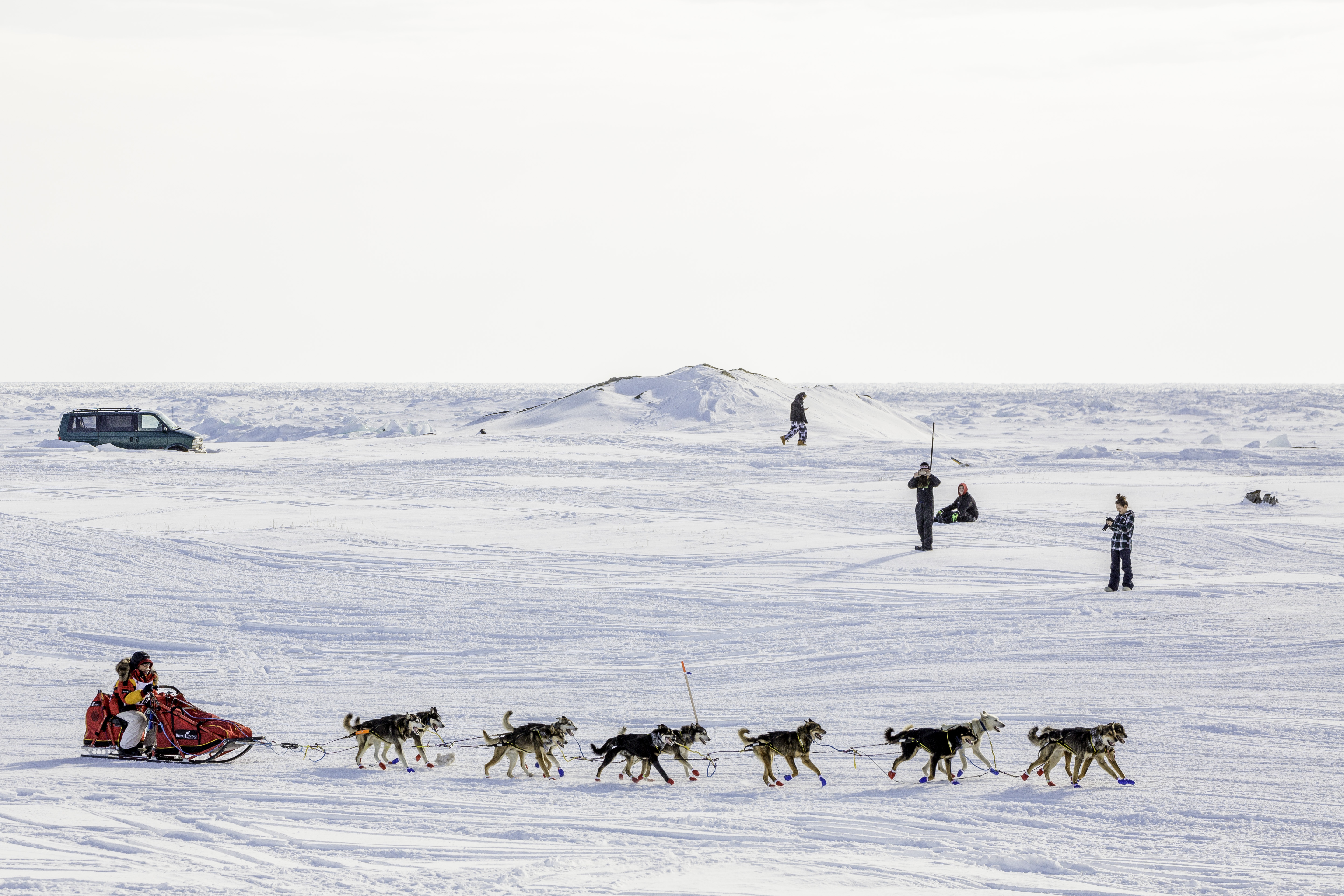 Iditarod 2017 musher and champ, Mitch Seavey, heads for the finish line in Nome.