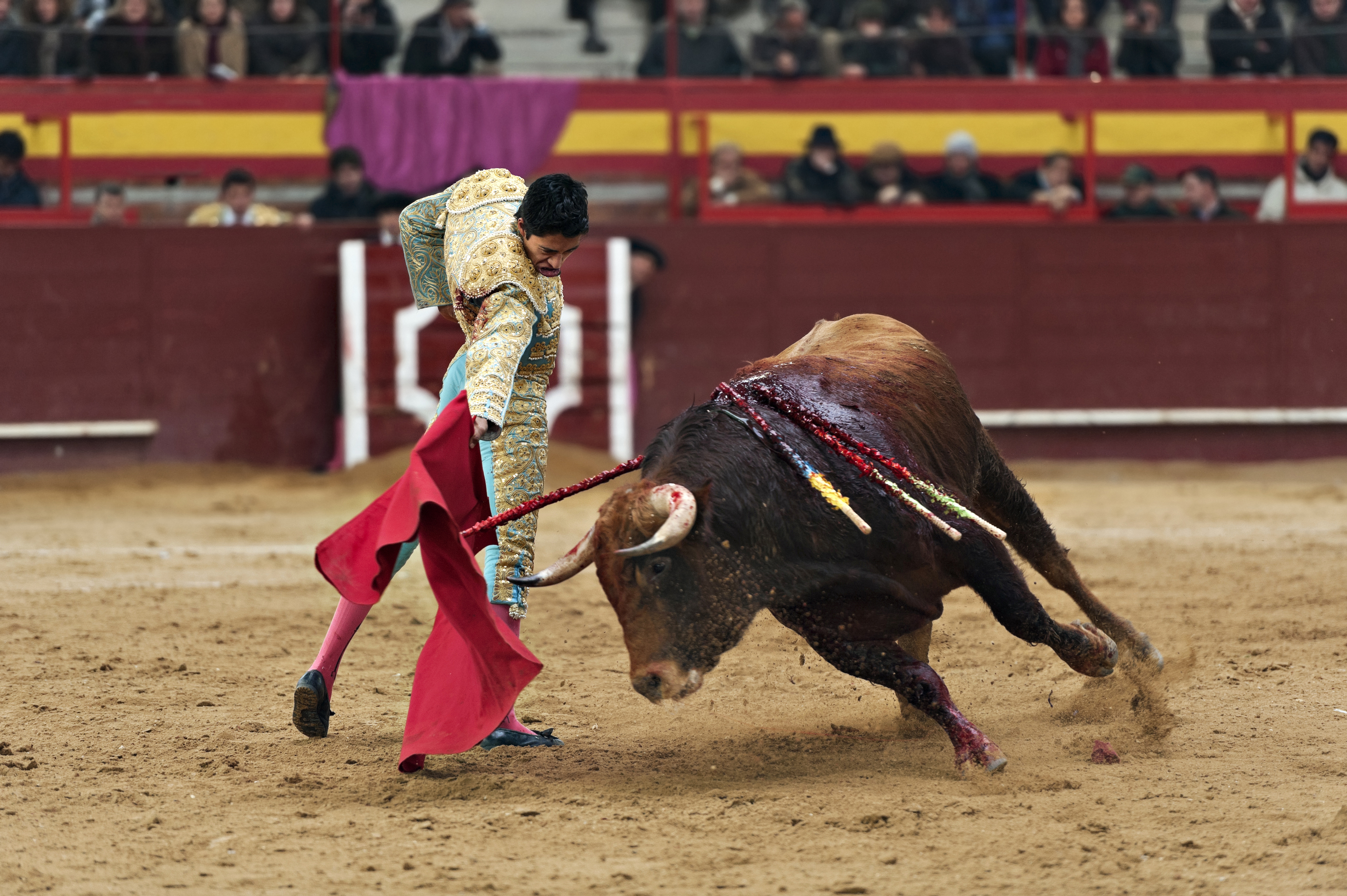 The death of a bull in the ring