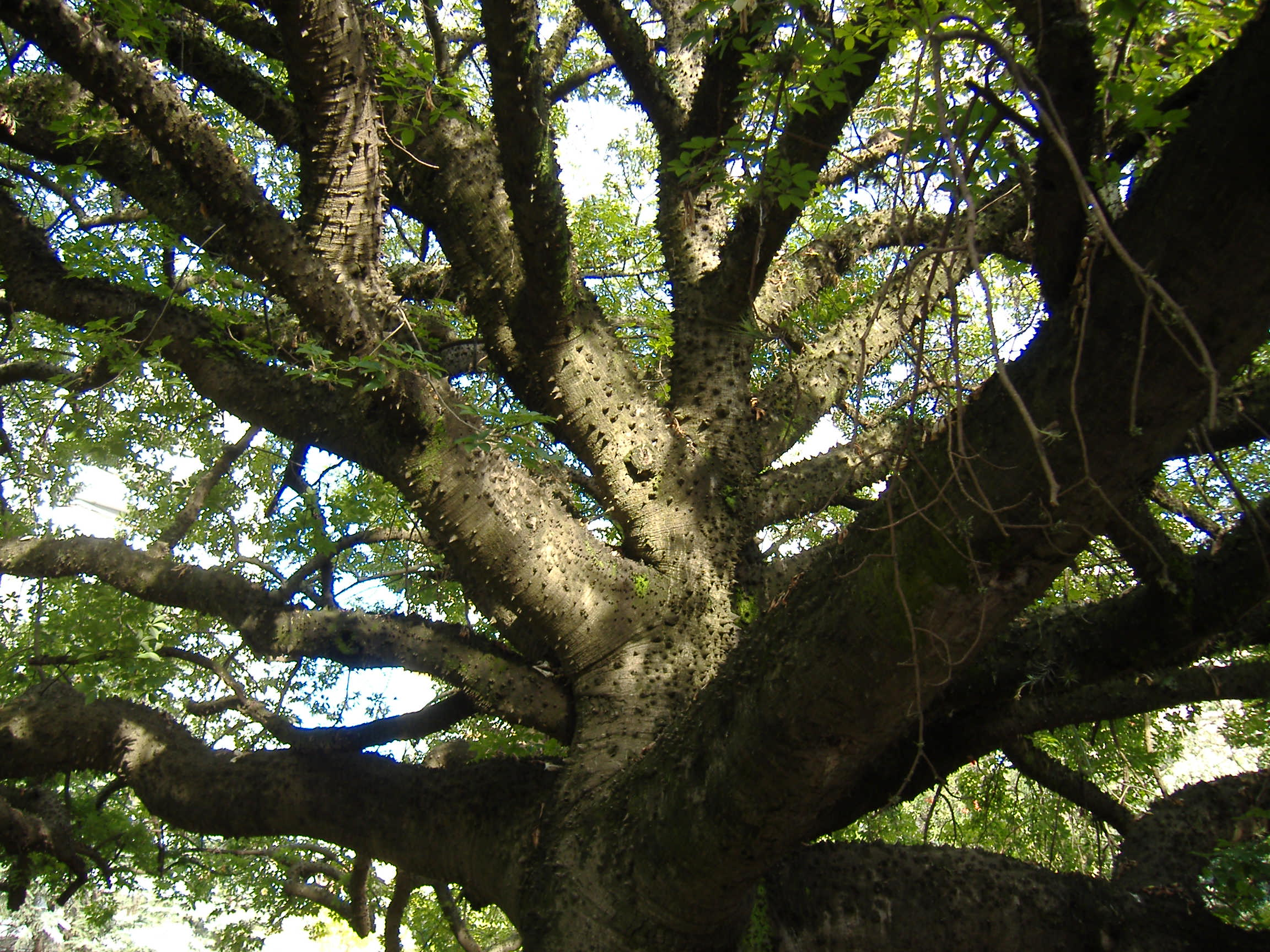 but only god can make a tree joyce kilmer