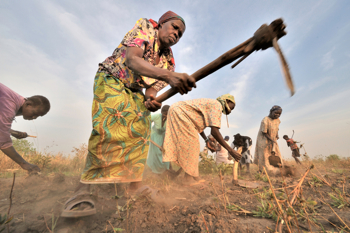 Gm crops grow 39 new form of slavery 39 america magazine for African crops and slave cuisine