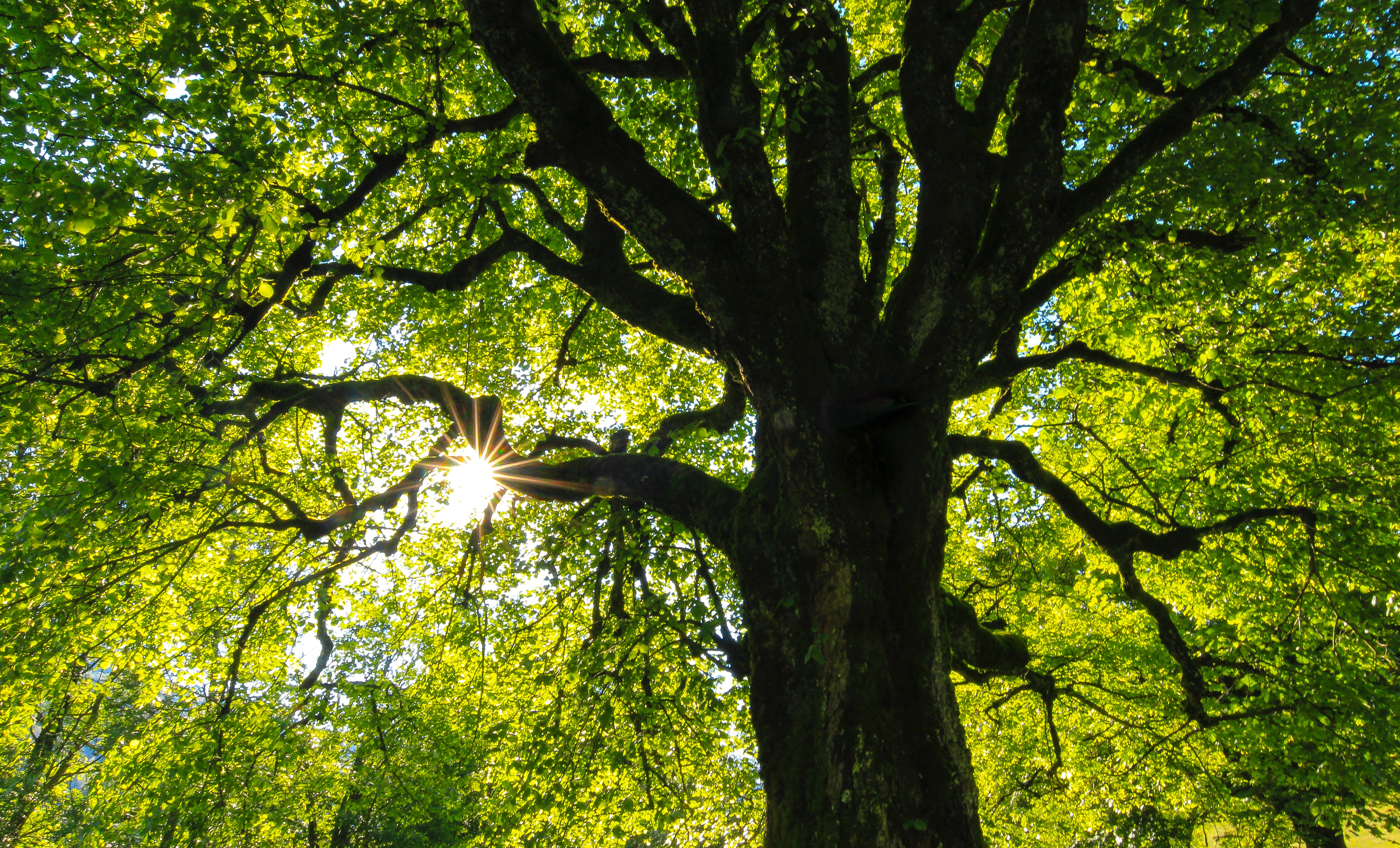 Only God Can Make A Tree The Catholic Behind The Famous Arbor Day Poem America Magazine (sometimes when you don't know something can't. only god can make a tree the catholic