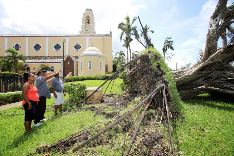 Parishioners point at a fallen tree uprooted on the grounds of St. Mary Cathedral in Miami after the passing of Hurricane Irma in September. (CNS photo/Marlene Quaroni, Florida Catholic newspaper)