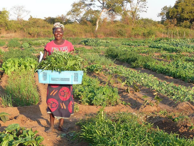 A Zambian woman poses for a photo holding produce cultivated on the Jesuit-run Kasisi Agricultural Training Centre. The center promotes organic, ecologically sustainable, no-till farming for small-scale farmers. (CNS photo courtesy Canadian Jesuits International)