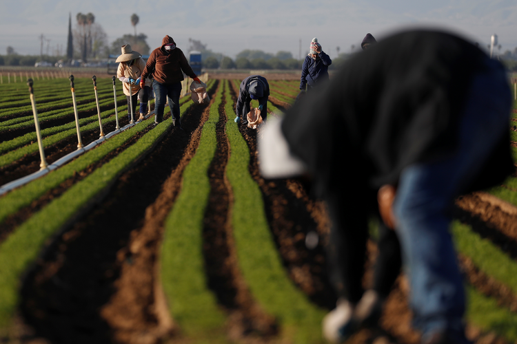 Agricultural workers in Arvin, Calif., clean carrot crops April 3, 2020, during the coronavirus pandemic. (CNS photo/Shannon Stapleton, Reuters)