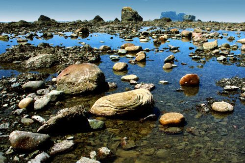 Tidepools at Olympic National Park in Washington state (Wikimedia Commons/Brian W. Schaller)