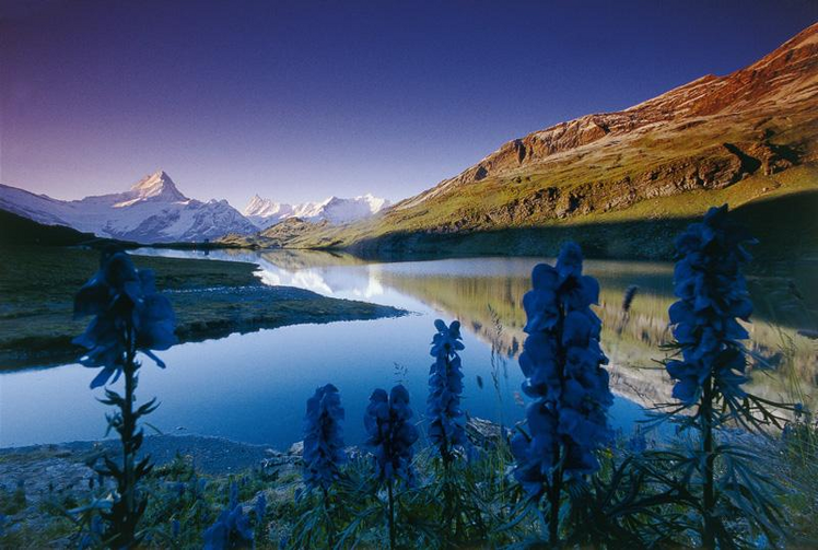 Bachalpsee Lake in the Swiss Alps (Photo via Wikimedia Commons)