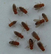 Newt Gingrich is calling for more government spending on medical research, but will he stick up for heroic fruit flies?