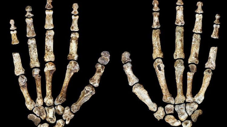 "A new human-like specie named Homo ""naledi"" has been discovered in South Africa"