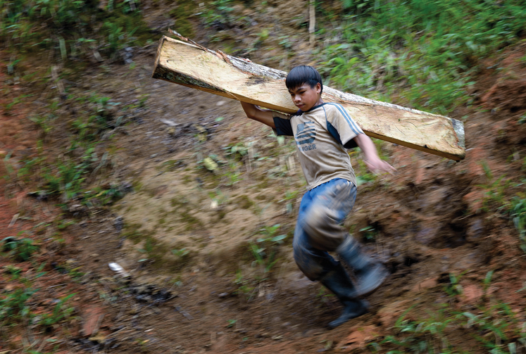 Work of Little Hands: A boy carries timber destined for a mine tunnel in the Philippines