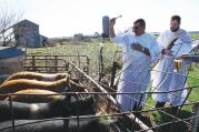 BLESSING BEASTS. Deacon Eric Bertrand and Deacon Tom Hunkele bless hogs in Iowa on April 10.