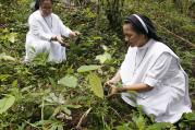 Catholic nuns plant mahogany tree saplings during a Feast of the Forest event in Cagueban town in the western Philippines, on June 30, 2012. Photo courtesy of Reuters/Romeo Ranoco
