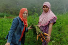 Small family farmers on the island of Sulawesi in Indonesia improved their carrot crop yields and are moving towards organic farming thanks to support from Development and Peace. Photo credit: Kelly Di Domenico/Development and Peace-Caritas Canada
