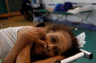 An elderly woman rests on Sept. 25 at a shelter set up in the Pedrin Zorrilla coliseum in San Juan, Puerto Rico, after the area was hit by Hurricane Maria. (CNS photo/Carlos Garcia Rawlins, Reuters)