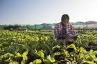 Social entrepreneurship programs, including those that promote sustainable agriculture, can benefit from the principles of the Spiritual Exercises. (iStock)